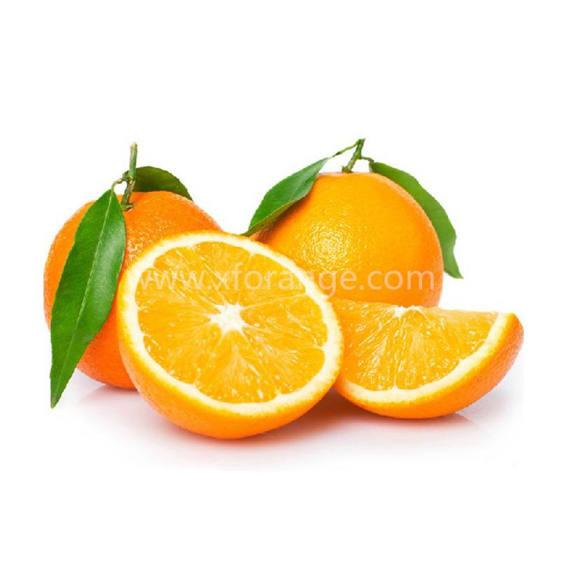 精品信丰脐橙纽贺尔礼盒装