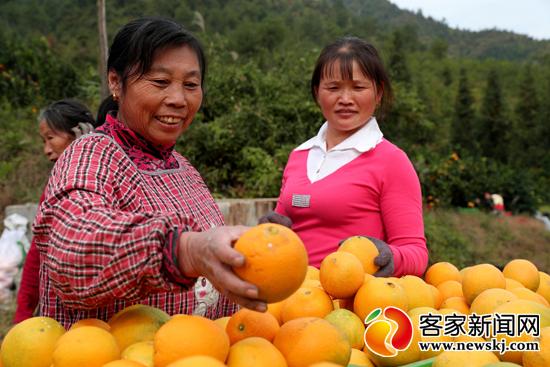 如何挑选一个好柚子