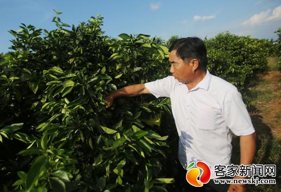 邓大庆:努力把赣南脐橙销往世界各地