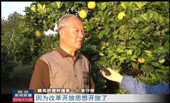 赣州:一颗脐橙打造富民产业