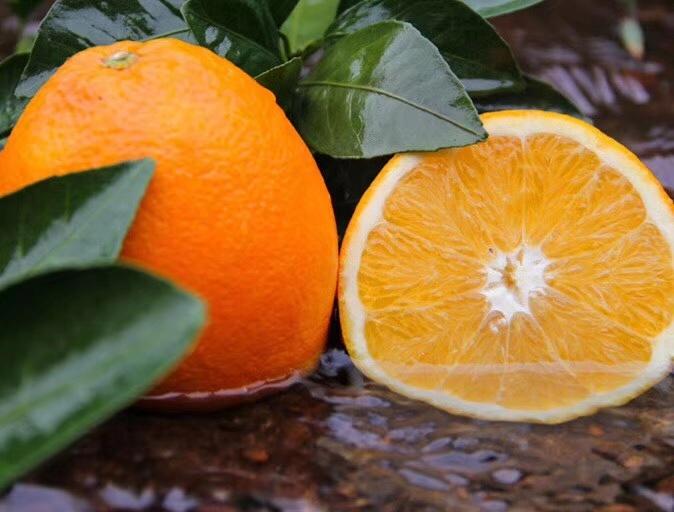 信丰助力脐橙产业高质量发展