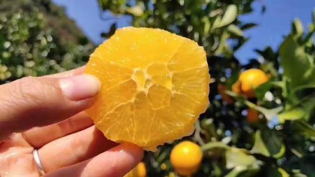 市场上的橙子千千万万,赣南脐橙凭什么一枝独秀?