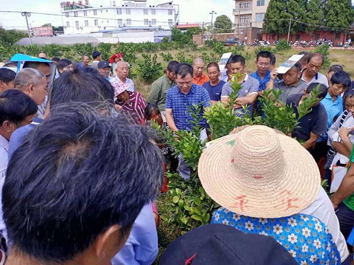 大塘埠镇举办脐橙技术实地培训班