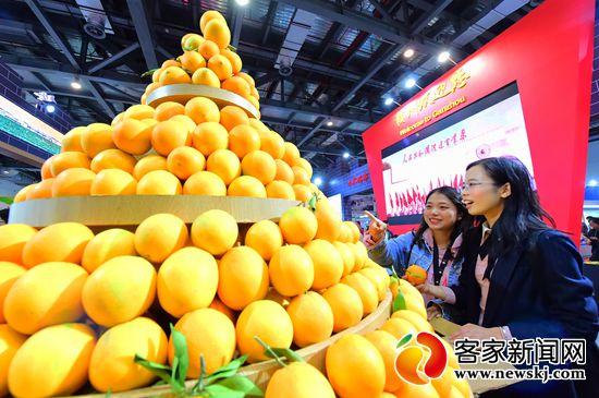 2019赣南脐橙网络博览会开幕时间调整为11月30日