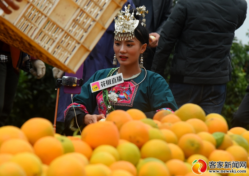"""网红主播走进信丰传递""""橙熟的喜悦"""""""
