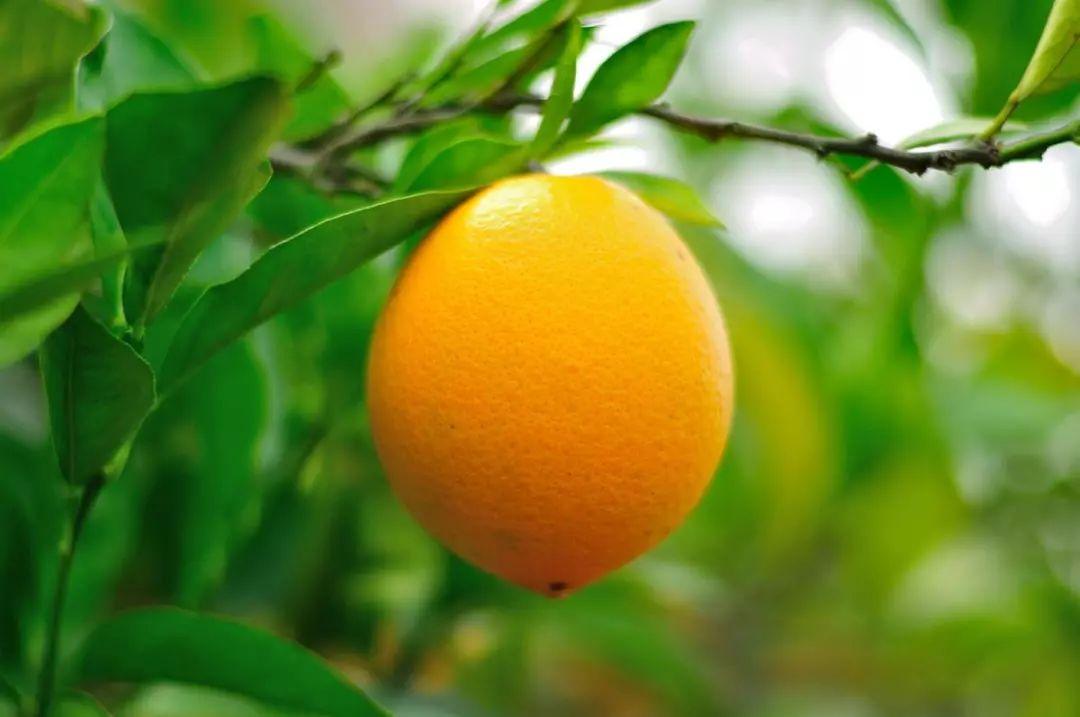 安利你赣南脐橙新吃法!