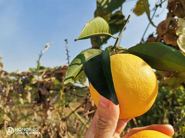 赣南脐橙网络博览会11月15日在赣州举办