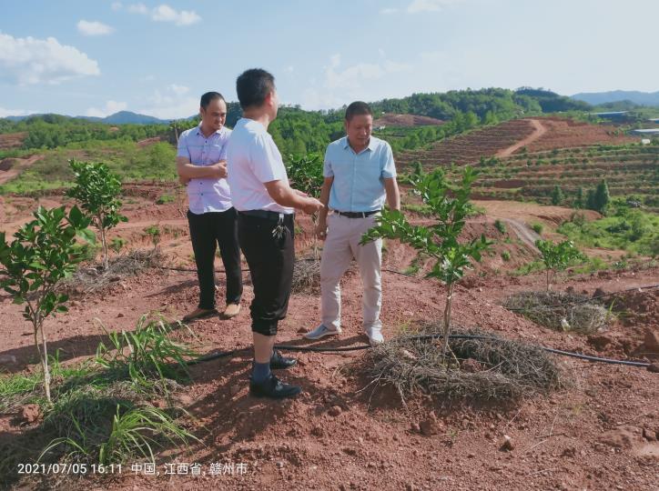 大塘埠镇果茶站在光甫村指导标准果园建设工作
